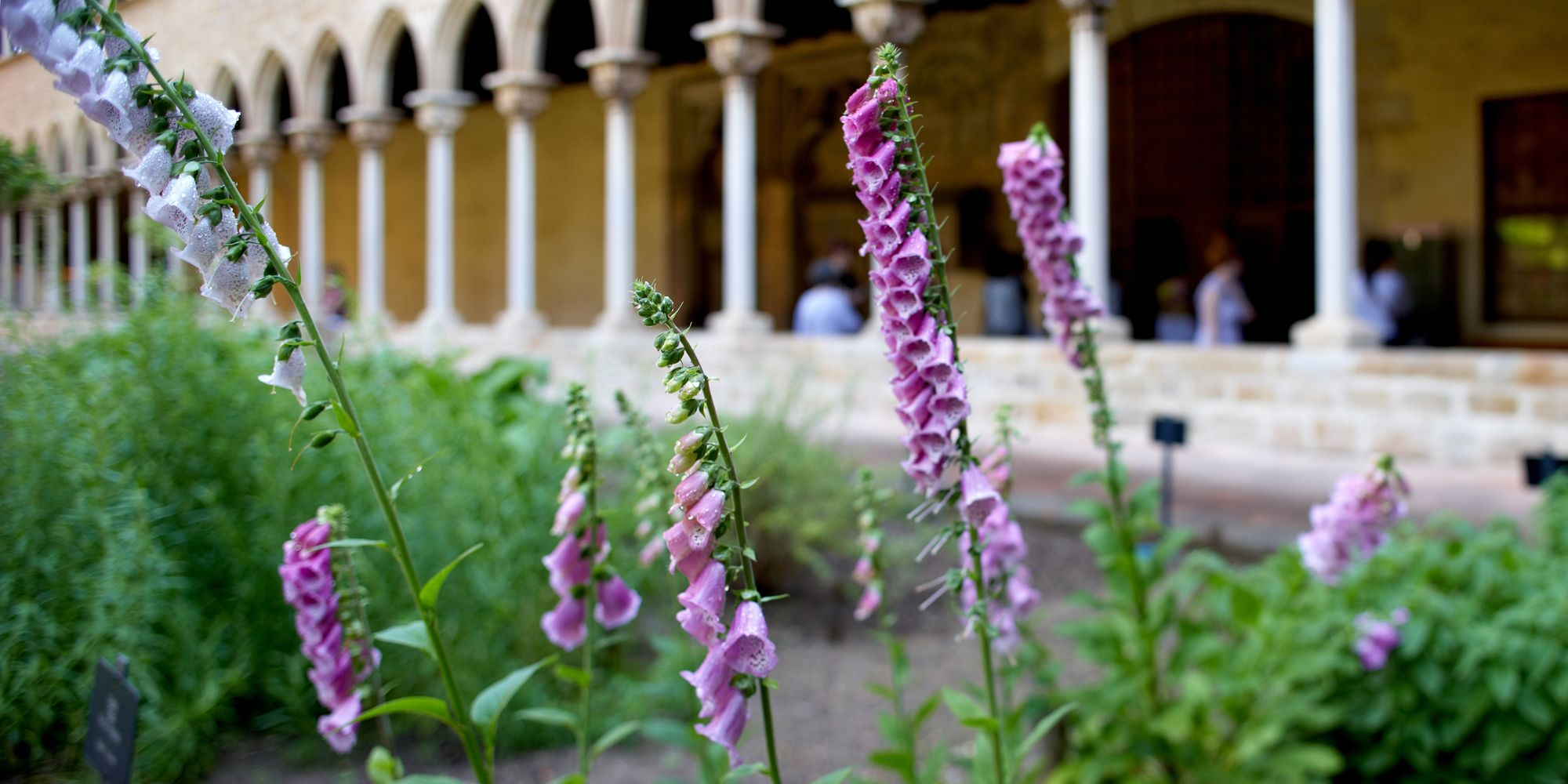 detall exposició plantes